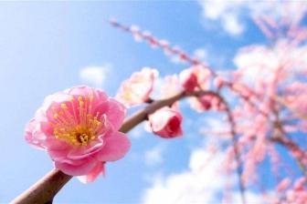 有哪些花卉植物在三月份开花